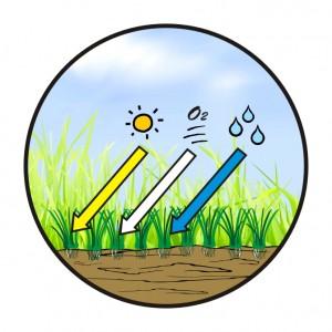 trávník po verkutikutaci